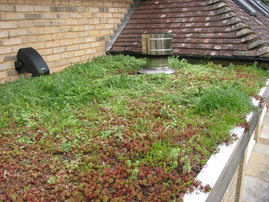 Sedum, green sedum roof, 950 brick oven, four grand-mere, green roof,